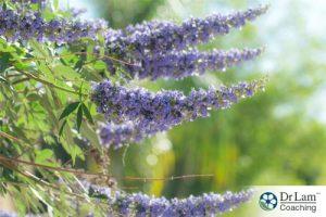chasteberry-adrenal-hyperplasia-36200-3